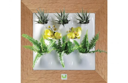 Zeleni zid, hrast